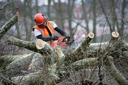 Tree removal Long island NY