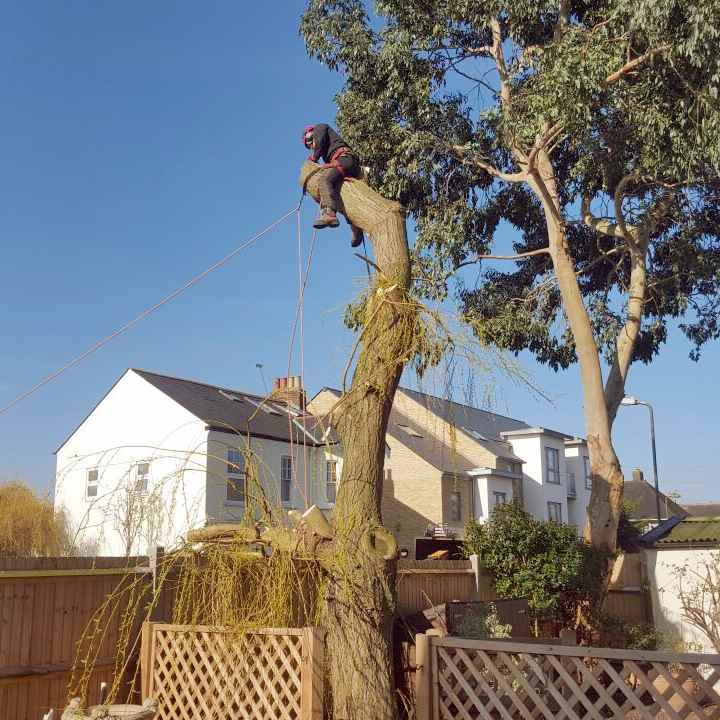 Tree Removal Surrey