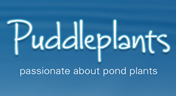 Puddleplants Logo