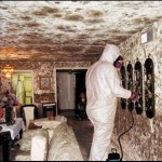 Baltimore mold remediation and removal